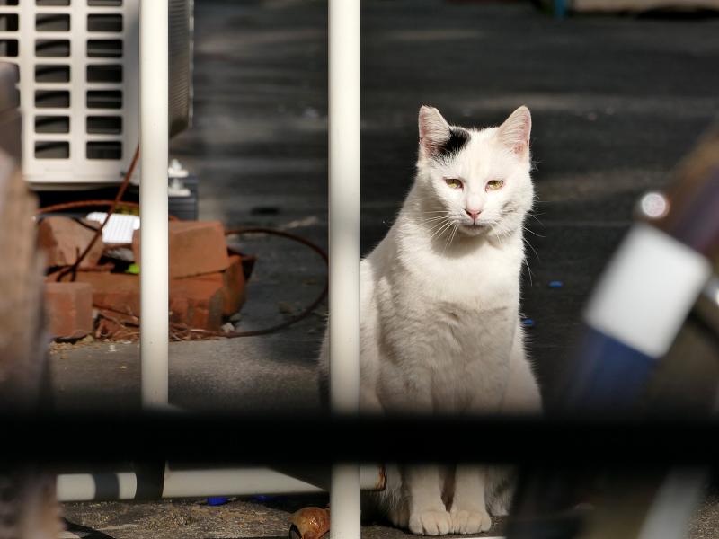 アパート敷地内の白黒猫1