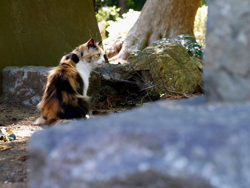 石碑と三毛猫1