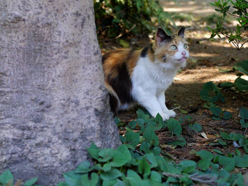 石碑と三毛猫2