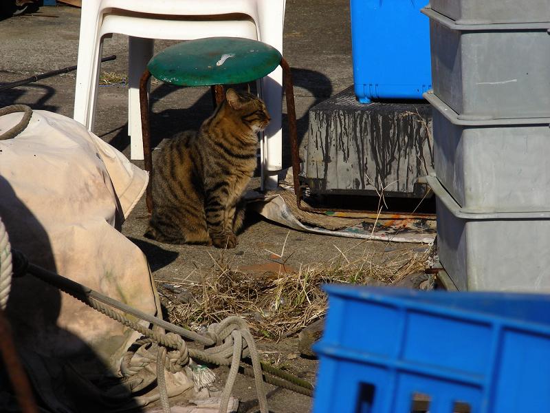 物置き場のキジトラ猫1
