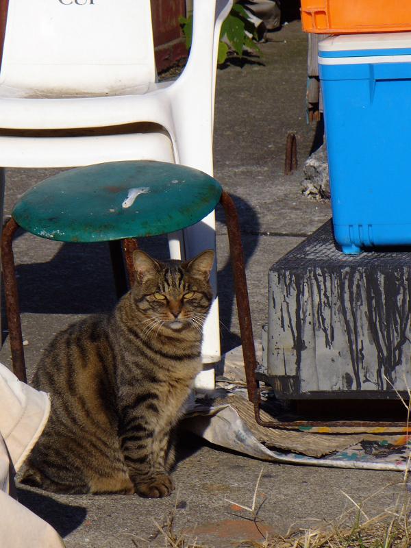 物置き場のキジトラ猫2
