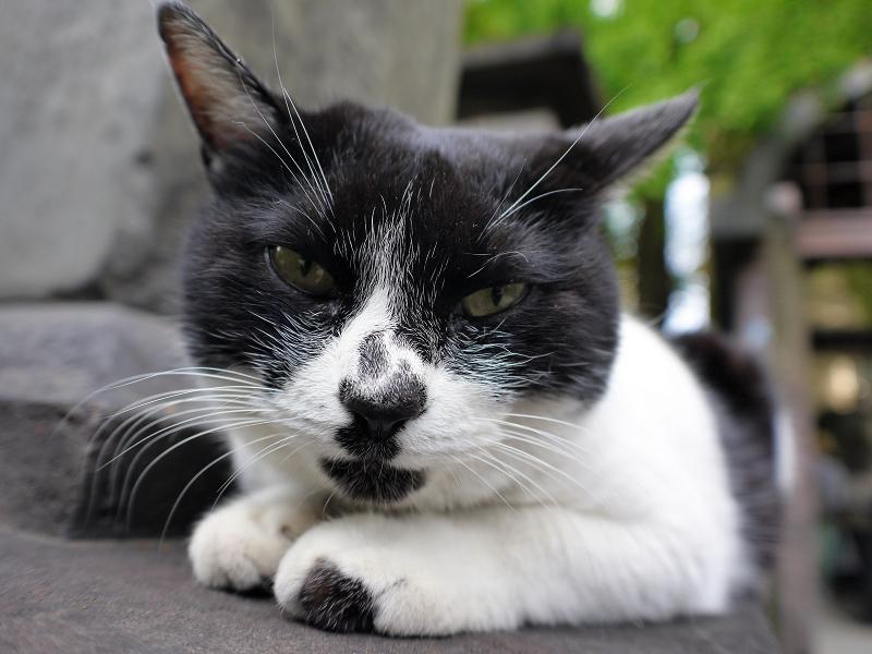 石碑に乗って寝そうな白黒猫1