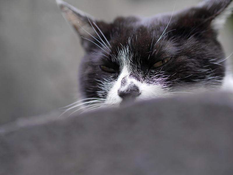 石碑に乗って寝そうな白黒猫2