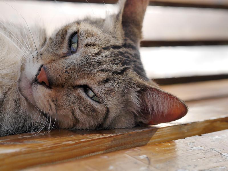 茶色ベンチとキジトラ猫2