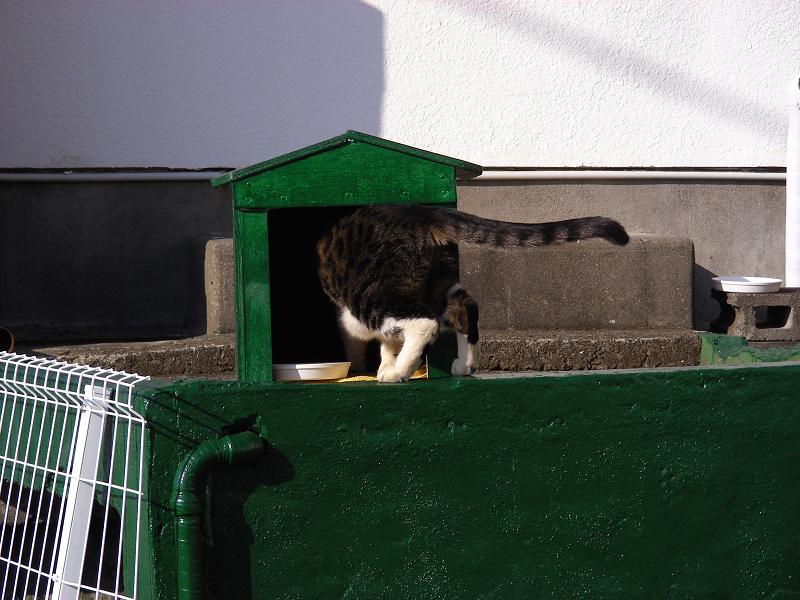 緑ハウスのキジ白猫2