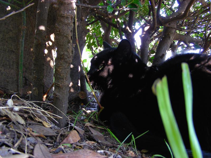 木漏れ日当たる黒猫2