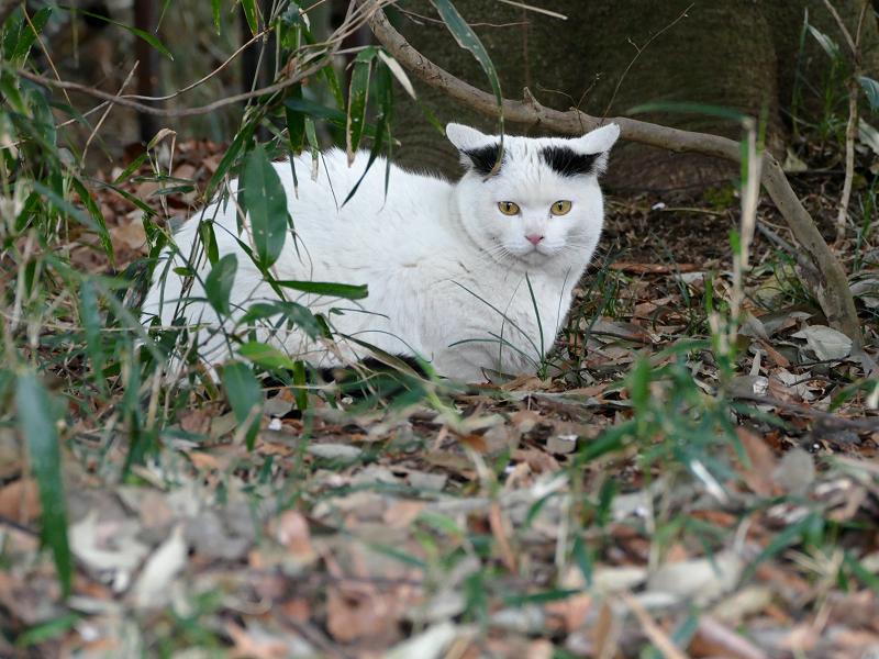 公園の白黒猫