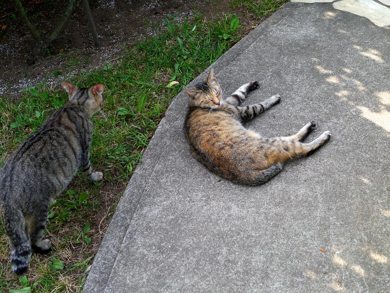 コンクリート通路と猫たち1