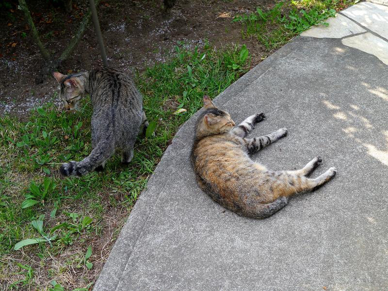 コンクリート通路と猫たち2