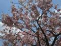 2017.4.28奈良・滋賀7