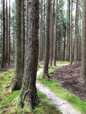 大丹倉の森