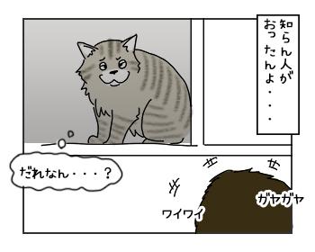 02062017_cat2mini.jpg