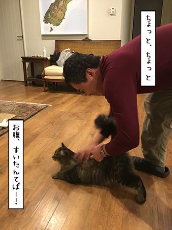 02062017_cat5.jpg