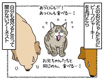 03072017_cat1mini.jpg