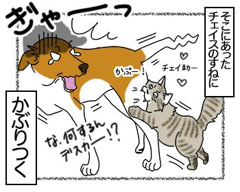 03072017_cat4mini.jpg