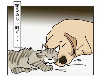 06062017_cat1mini.jpg