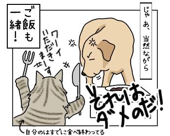 06062017_cat4mini.jpg