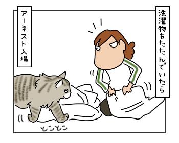 07062017_cat1mini.jpg