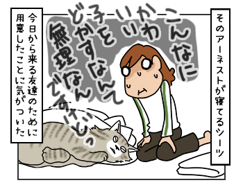 07062017_cat4mini.jpg