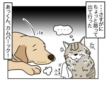 10072017_cat4mini.jpg