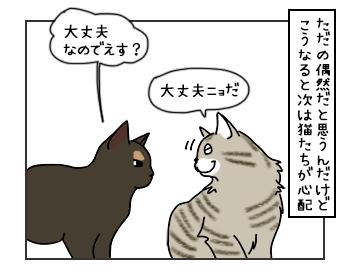 13062017_cat4mini.jpg