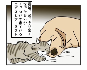 15052017_cat1mini.jpg