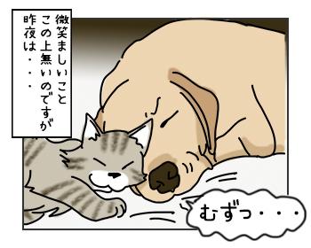 15052017_cat2mini.jpg