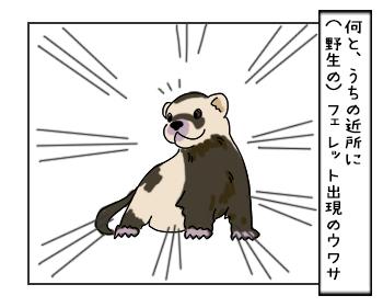 15062017_cat1mini.jpg