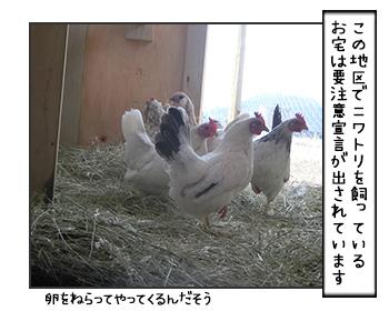 15062017_cat2mini.jpg