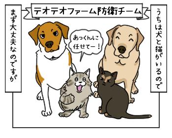 15062017_cat3mini.jpg