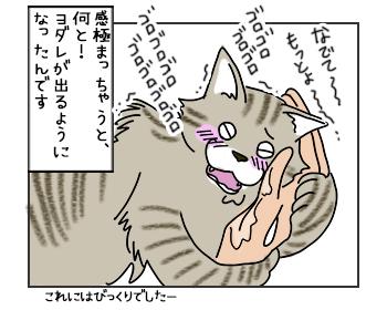 16052017_cat2mini.jpg