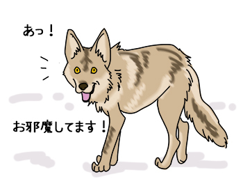 16062017_cat1.jpg