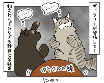 17052017_cat4mini.jpg