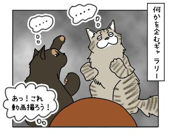 17052017_cat5mini.jpg
