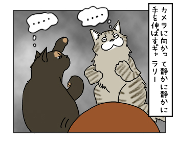 17052017_cat7mini.jpg