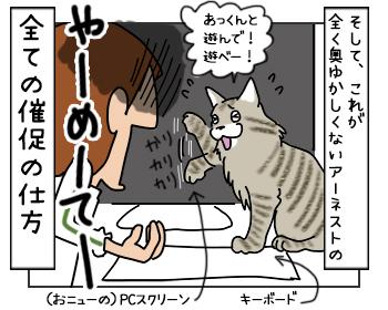 18052017_cat4mini.jpg