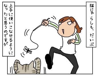 19052017_cat1mini.jpg