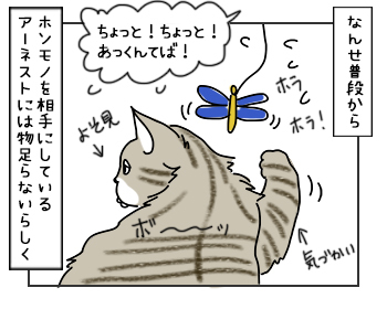 19052017_cat2mini.jpg