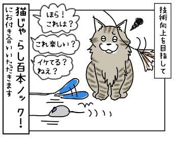 19052017_cat4mini.jpg
