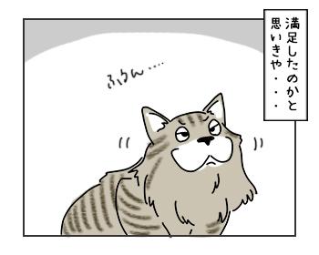 19062017_cat3mini.jpg