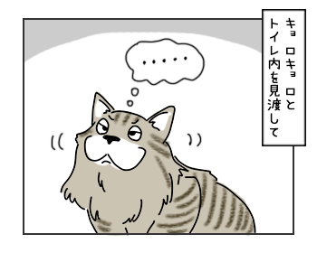19062017_cat4mini.jpg