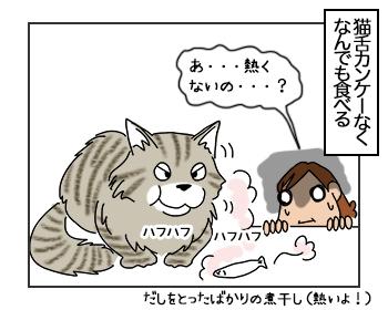 22062017_cat2mini.jpg