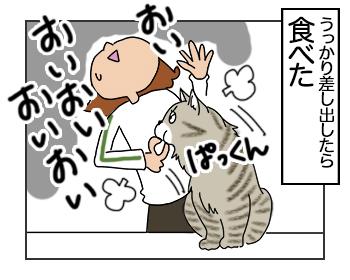 22062017_cat4mini.jpg