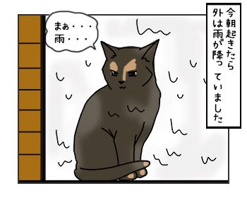 23052017_cat1mini.jpg