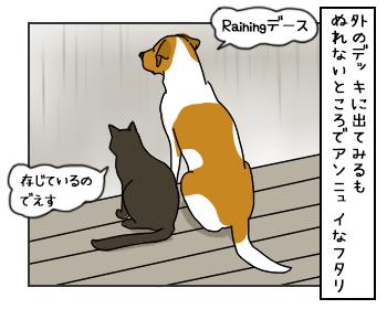 23052017_cat2mini.jpg