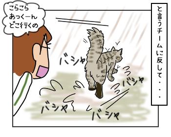 23052017_cat3mini.jpg