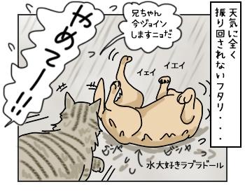 23052017_cat4mini.jpg