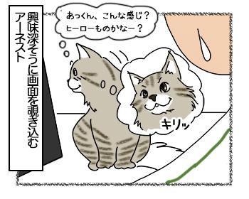 23062017_cat3mini.jpg