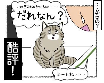 23062017_cat4mini.jpg