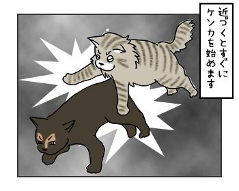 24052017_cat2mini.jpg